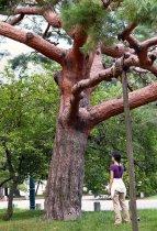 image fille-arbre-kyoto-2-jpg