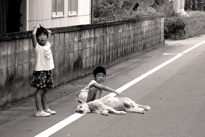 chien-mort