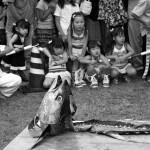 Gloire et déchéance du thon rouge au Japon