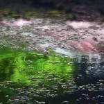 Le Jardin des Mots (Makoto Shinkai - 2013)