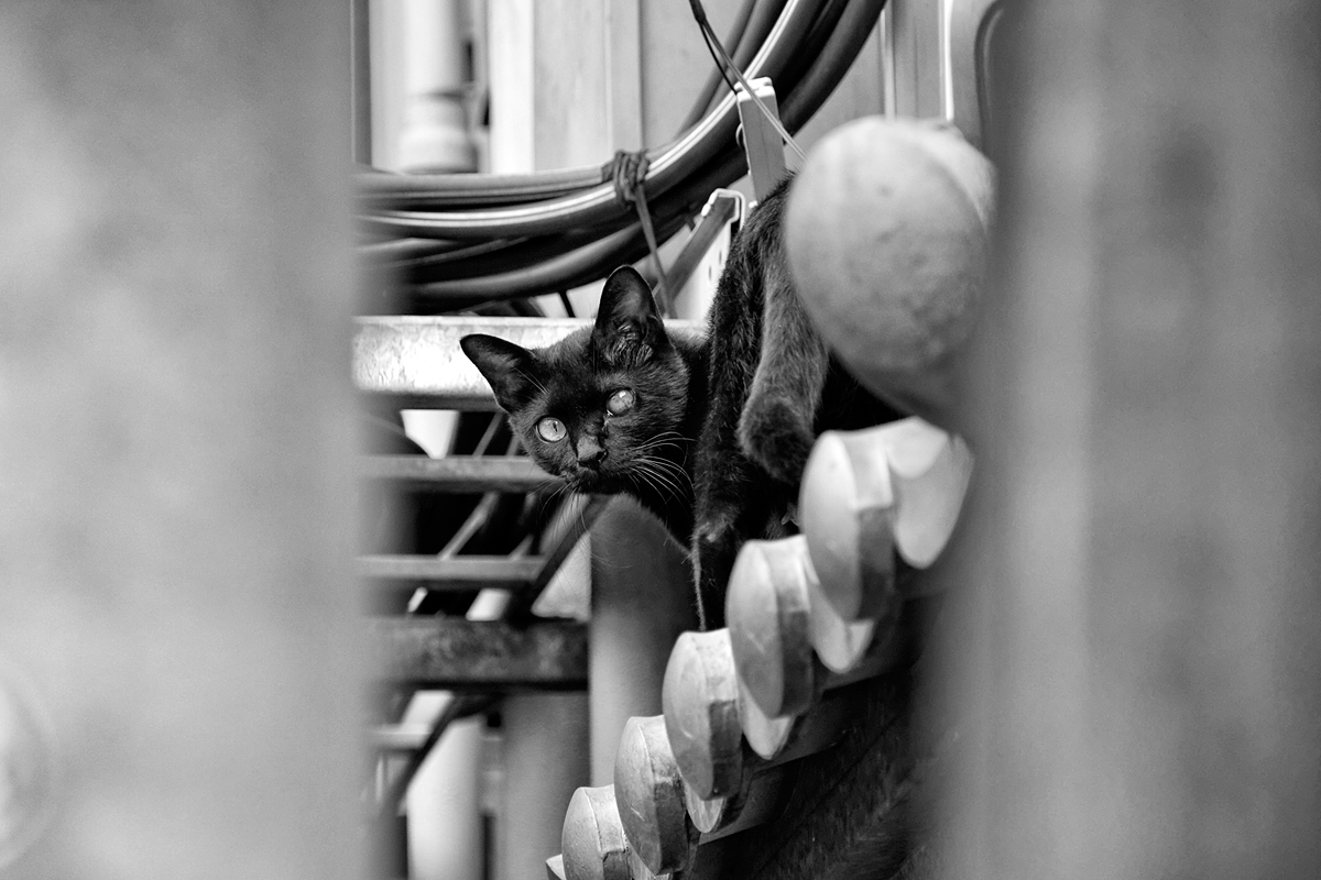 chat borgne2