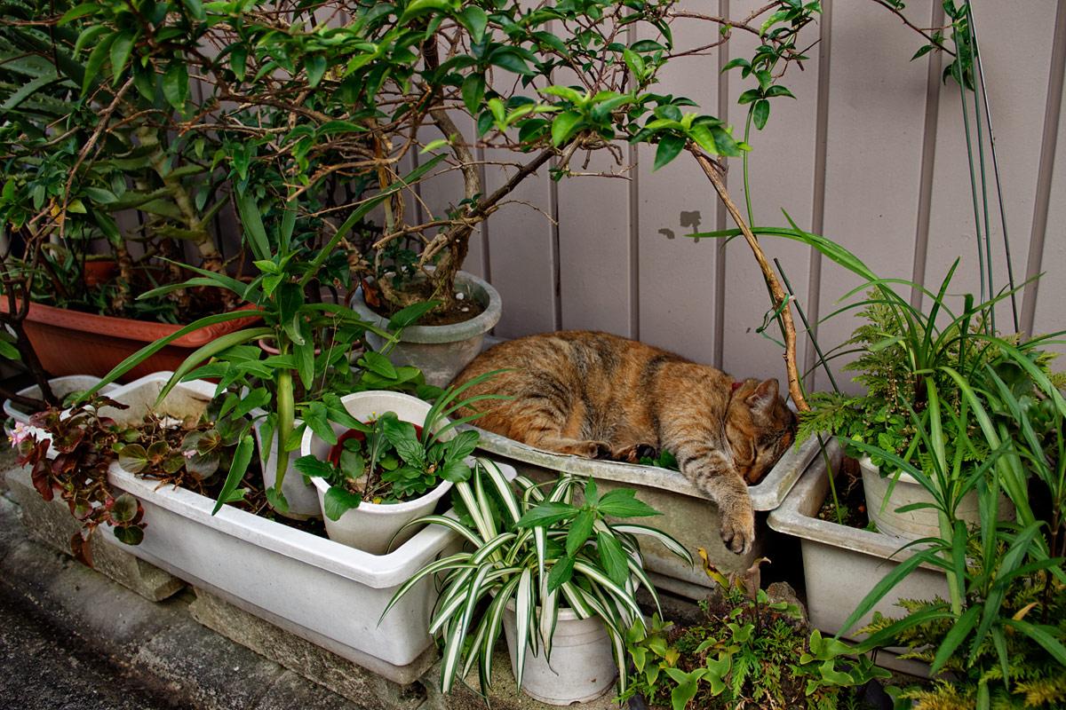 chat pot de fleurs