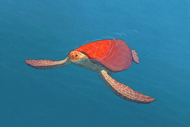 la-tortue-rouge-7